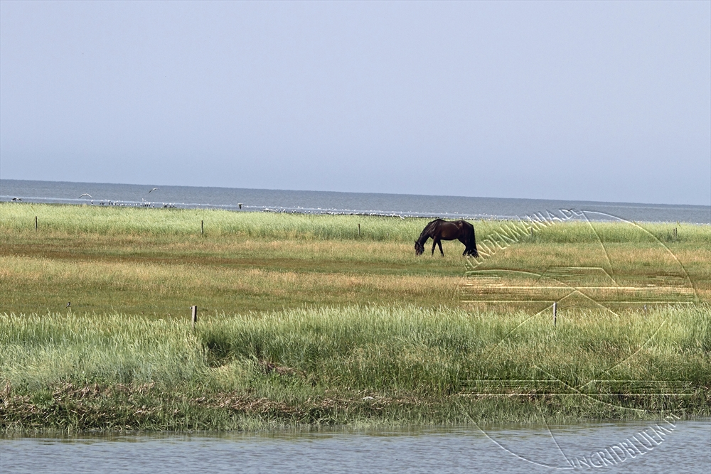 2010_07_nordsee_18