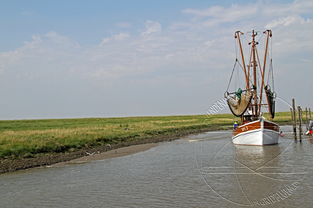 2010_07_nordsee_24