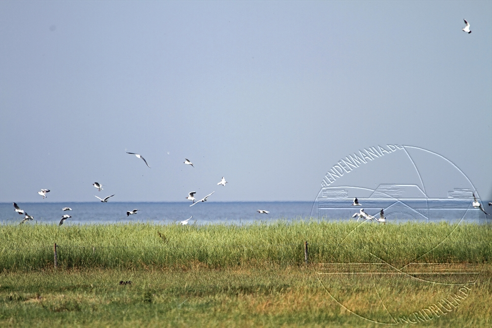 2010_07_nordsee_25