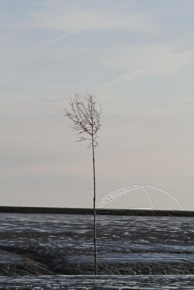 2011_05_spieka_17