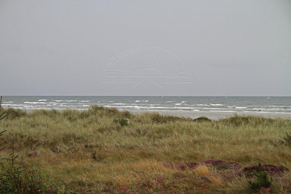 2011_08_11_kattegast_1
