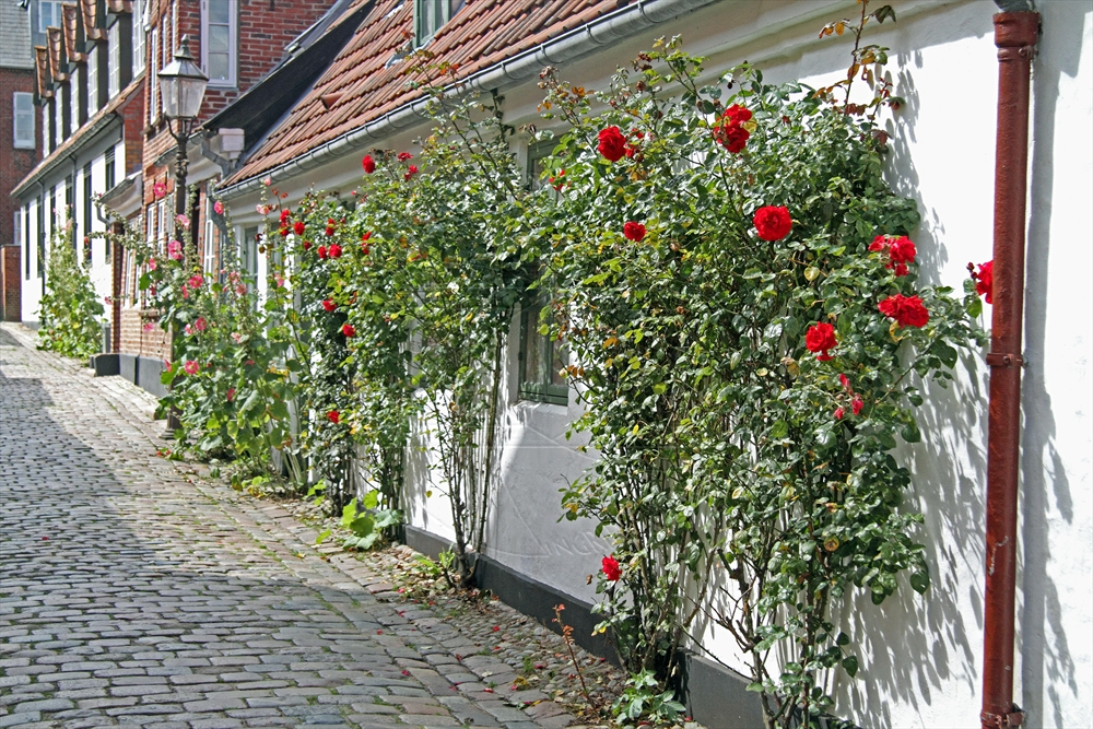 2011_08_sommer_3_ribe_12