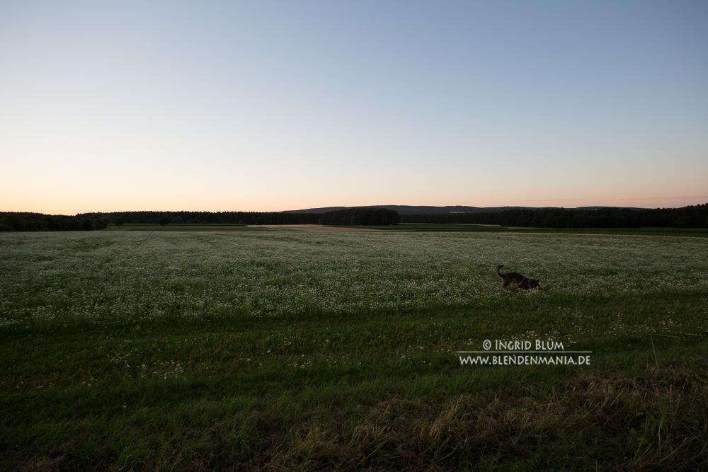 niederbayern (2 von 2)